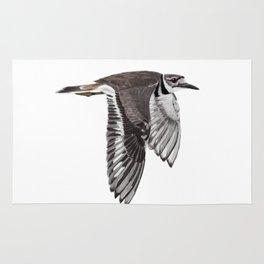 Vociferus peruvianus - Charadrius - Killdeer - Chorlo gritón Rug