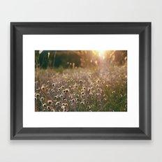 August Evening Framed Art Print