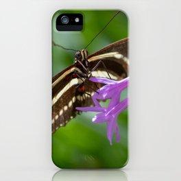 Zebra Longwing Butterfly 4 iPhone Case