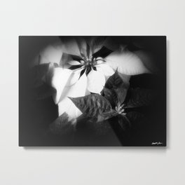 Mixed Color Poinsettias 2 Dark Metal Print