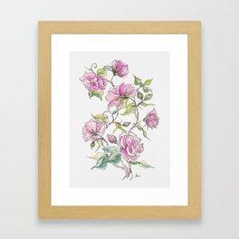 Pink Climbing Rose Framed Art Print