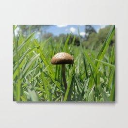 sunny mushroom Metal Print