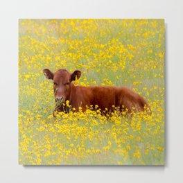 Baby Cow Metal Print