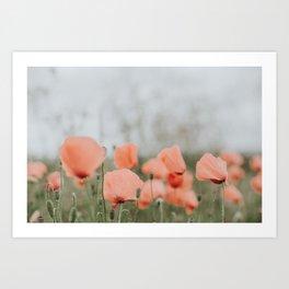 Peach Poppies Art Print