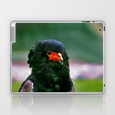 Bateleaur Eagle Laptop & iPad Skin