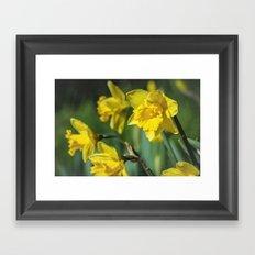 Dancing Daffodil Framed Art Print