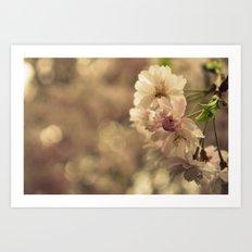 Cherry Blossom Bokeh Art Print