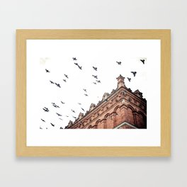 Citys Bird Sanctuary Framed Art Print