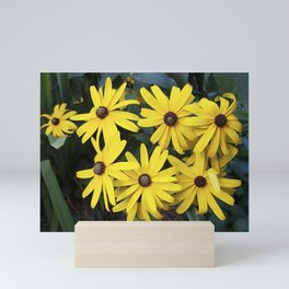 Garden Gold - Rudbeckia Mini Art Print