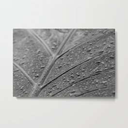 Macro still life, fine art, interior decoration, home design, b&w photo, flowers, leaves Metal Print