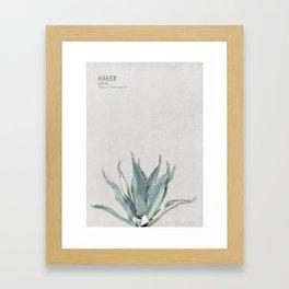 Green Agave 01 Framed Art Print