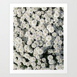 Pale Blooms Art Print