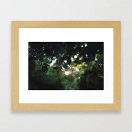 Sunlit Nature Framed Art Print