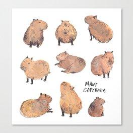 Many capybaras Canvas Print