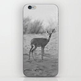 Black and White Dik-dik antelope iPhone Skin