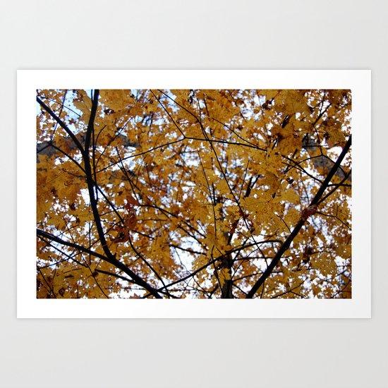 A Change of Seasons  Art Print