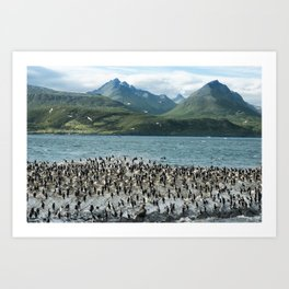 Colony of King Cormorants On Ilha Dos Passaros Located on the Beagle Channel, Tierra Del Fuego, Arge Art Print