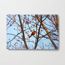 Red Robin Metal Print