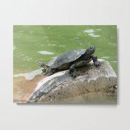 Turtle Pond Metal Print