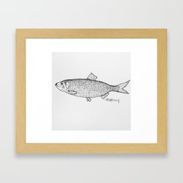 Herring Framed Art Print