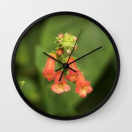 Kohleria from Bud to Bloom Wall Clock