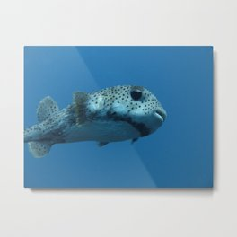 Pufferfish Metal Print