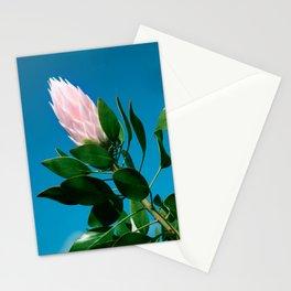 Pink King Protea cynaroides Sugar Bush Stationery Cards