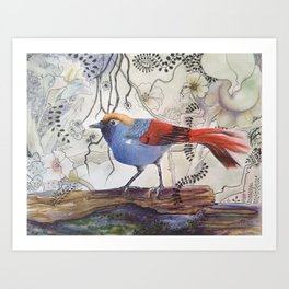 Just Be: Red-Tailed Laughing Thrush Art Print