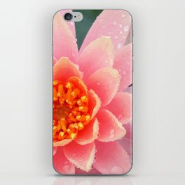 A Water Lily's Prime iPhone Skin