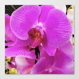 Pink-Purple Vibrant Luxurious Tropical Orchids Canvas Print