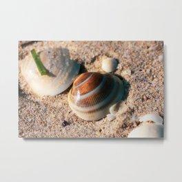 Sea Shell. Hawks Nest. NSW. Australia. Metal Print