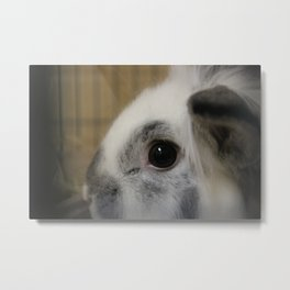 Fluffy Bunny Metal Print