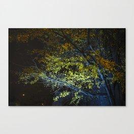 Autumn Tree at Night Canvas Print