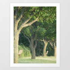 Beyond The Trees Is New Life  Art Print