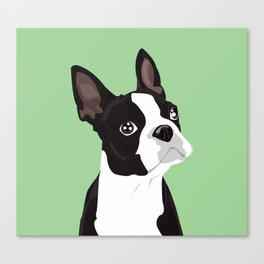 Boston Terrier Portrait - Green Canvas Print
