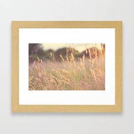 Summer Lights Framed Art Print