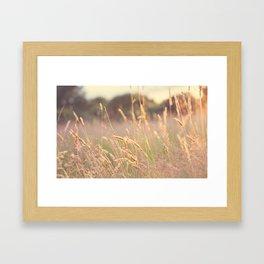 Summer Lights Framed Art Print