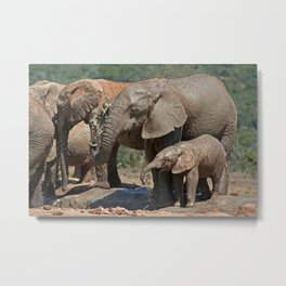 Elephants have fun with water - Africa wildlife Metal Print
