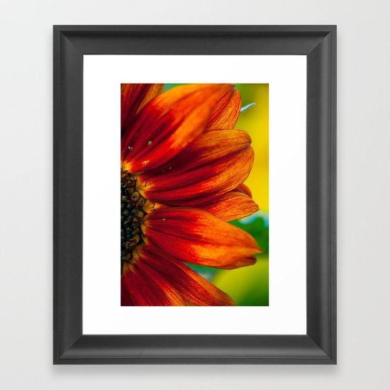 Red Sunflower Framed Art Print