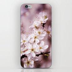 Tender spring iPhone & iPod Skin