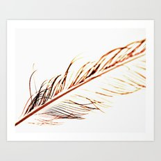 Peacock Feather 1 Art Print