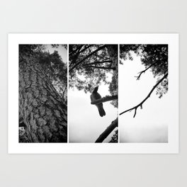 Under the Pine tree Art Print