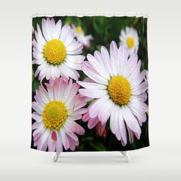 Three white and pink daisies Shower Curtain