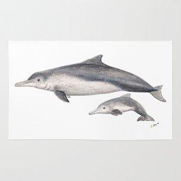 Australian humpback dolphin (Sousa sahulensis) with baby Rug
