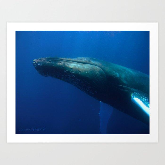 Humpback Whale checks me out Art Print