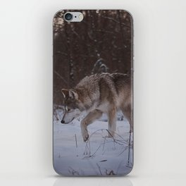 Searching iPhone Skin