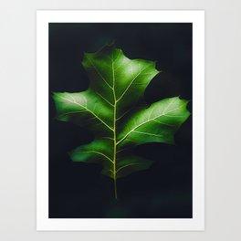 The Leaf (Color) Art Print