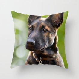 Cute Malinois - shephard puppy Throw Pillow