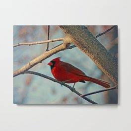 Pretty Male Cardinal Metal Print