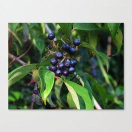 Evening Berries Canvas Print